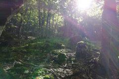 Tra i boschi finali