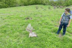 Alessio osserva carcassa di animale