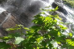 Natura viva all'Ortanza