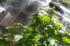 Verde su acqua di cascata
