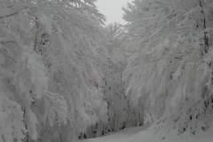 Montagna + Neve + Boschi = scenari unici!
