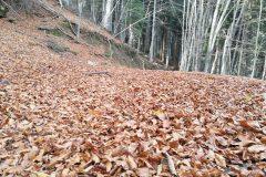 Letto di foglie autunnali