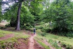 Salendo tra i boschi